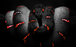 Who is the serpent in Genesis?