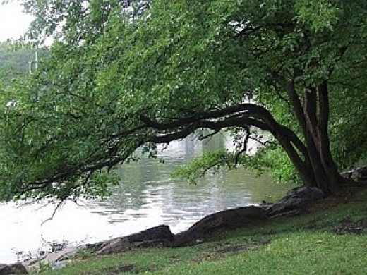 The survivor is like a tree planted by the waters.
