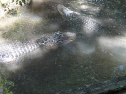 Gator Bait Series ...#4  At Your Discretion....Celebrate with Intention....