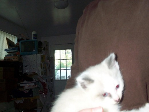 6-week old Knut being held for the first time