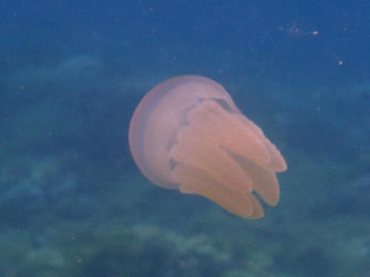 Santander, Cebu,Philippines - Snorkling & Diving