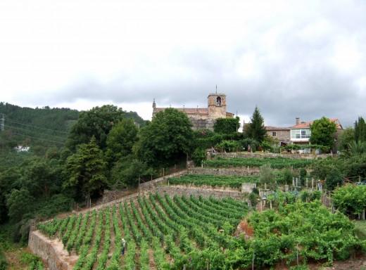 Vineyards near San Paio,  Ribadavia