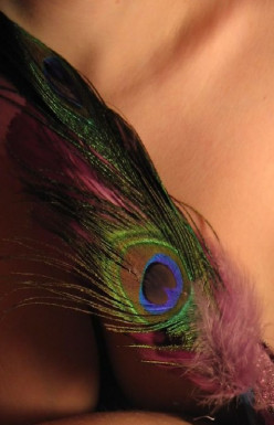 Peacock Feathers and Photography
