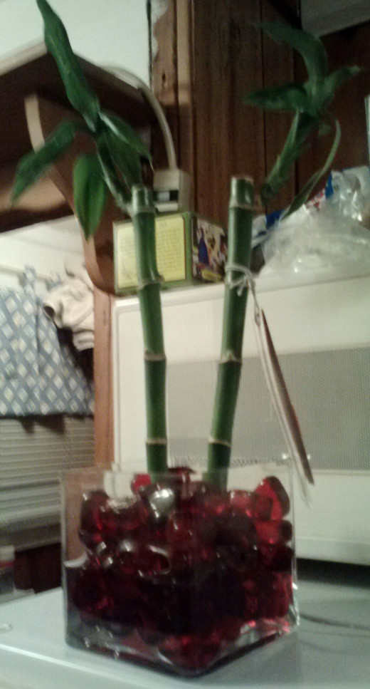 STEP THREE: Push lucky bamboo stalks gently into the vase then surround the stalks with more glass or stone beads until bamboo can stand upright by itself