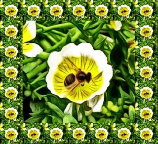 A Poached Egg Plant complete with a busy bee.
