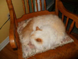 Axel has re-purposed what was once the breastfeeding rocking chair.  Does he sense the bond that was created there?
