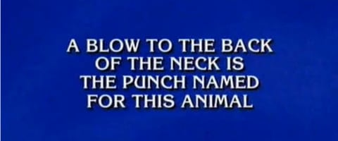 What is 'hamster'?