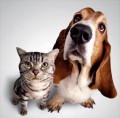 Dog People and Cat People Personality Types