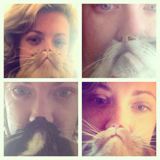 This was my attempt at cat bearding with Ck, Bella and Chloe.