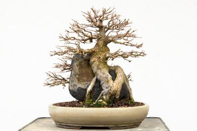 Root over rock
