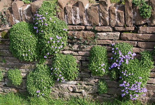 Vertical gardens can be established by planting into the nooks and crannies of existing stone and brick walls