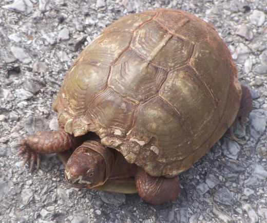A Wise Turtle