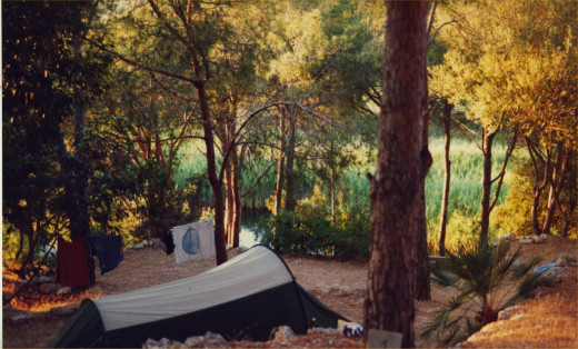 Our tent, pitched in trees near the beach.  Photograph by author.