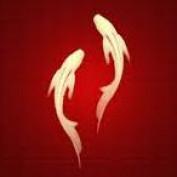 markfook profile image