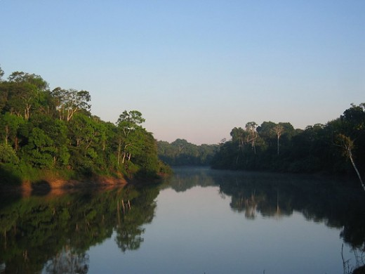 The Amazon River, home of the acai palm.