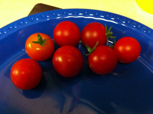 The first crop of tomatoes!