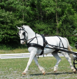 Quick Tips on teaching a horse to whoa