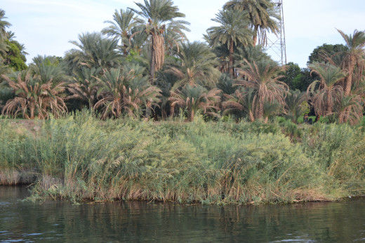 The beautiful Nile river bank
