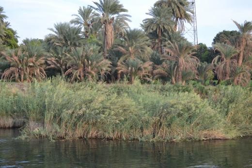The beautiful Nile river bank
