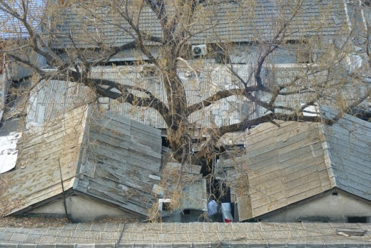 3 a) A Hutong, old Chinese homes, with a tree growing in the yard.
