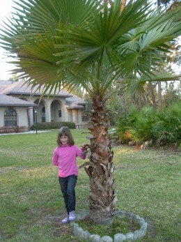 My daughter next to a palm tree in my aunt and uncle's front yard, in Florida