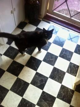 Leroy the cat