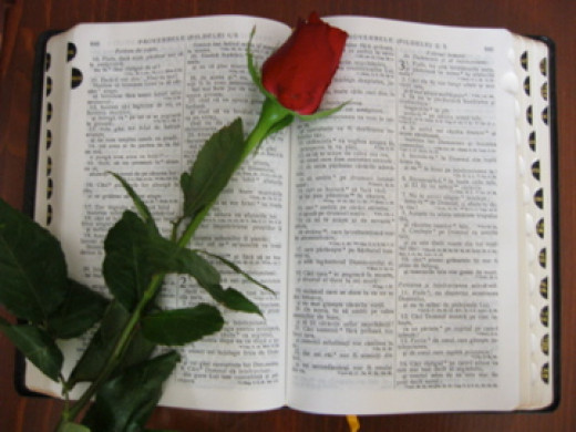 Bible with Rose by Vortix