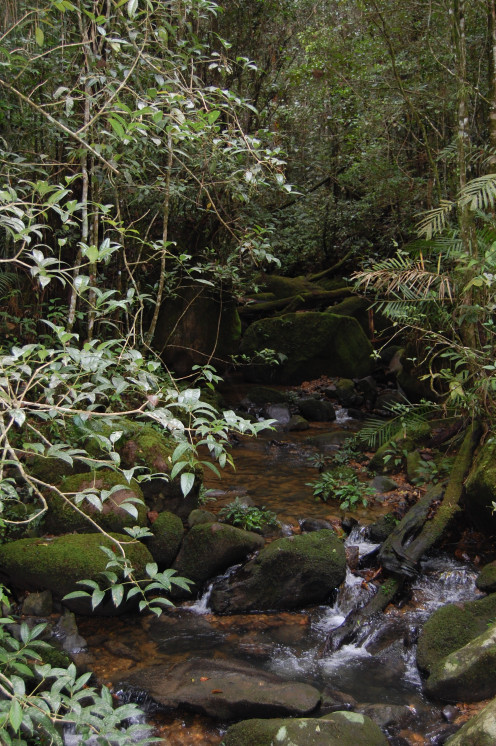 A Stream along one of the Trails