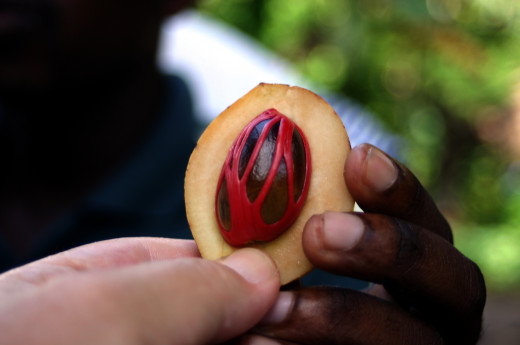red lacy mace surrounding the nutmeg seed.