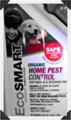 EcoSmart Bed Bug Spray Review