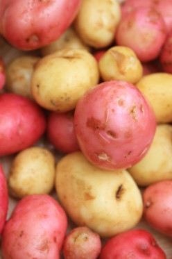 Why shouldn't potatoes be kept in the refrigerator?