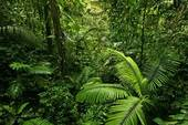 dense rainforest jungle