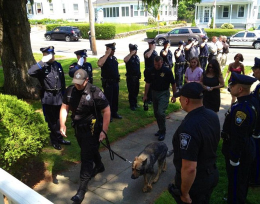 "Members of the Plymouth Police Department, Mass., stand at attention in gauntlet fashion to honor one of their own, K-9 ""Kaiser"", who was clambering into a veterinary clinic to be put down. Kaiser suffered countless days on duty with kidney disease."