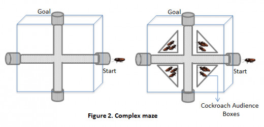 Zajonc's second cockroach experiment in which the presence of conspecifics decreased performance.