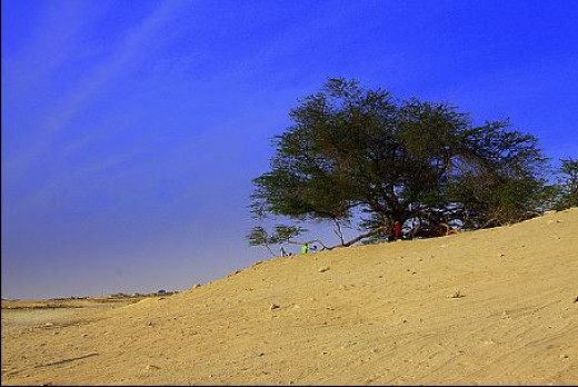 The Tree of Life at the middle of the barren desert in Bahrain. There is a hearsay that this area is said to be the Garden of Eden where the first man and woman lived.