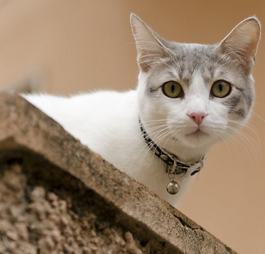 All a loving pet owner may get from a beloved pet kitty is a curious stare from a silly perch. This passive show of affection is often confused with a complete lack of emotional bond between owner and pet.