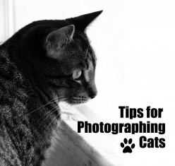 Tips for Photographing Cats