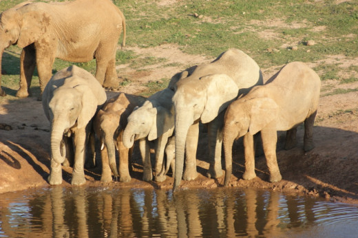 Waterhole with baby learning to drink water