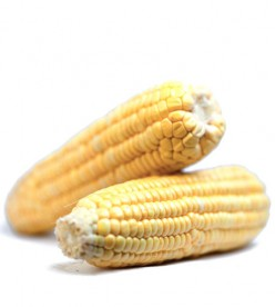 Health risks of GMO foods