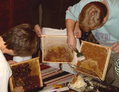 Bees wax is capped off before honey can be extracted.