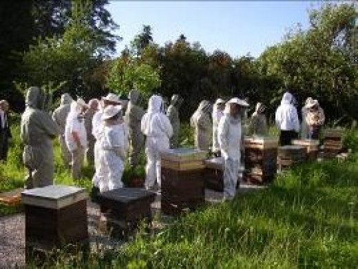 Students being taught the art of beekeeping.