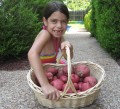 Beginners Garden - 10 Best Crops To Start A Garden