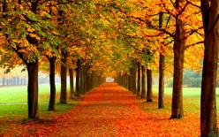 ~~~ Autumn Falls ~~~