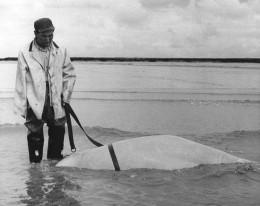 Hunting is putting belugas in danger