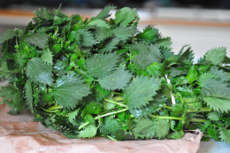 Bunch of fresh stinging nettles bough from farmers' market. Image: © Siu Ling Hui