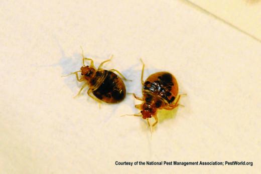 YIKES! Bedbugs!