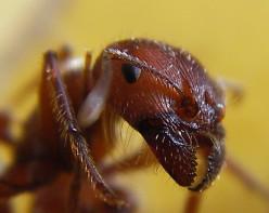 Incredible Ants