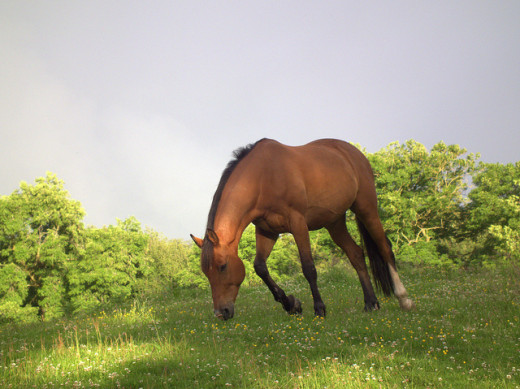 Horses can appear in our dreams for various reasons...
