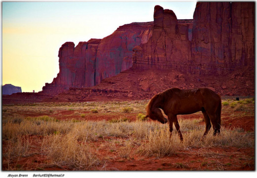 Horses can be serene and yet wild spirit guides in our dreams...