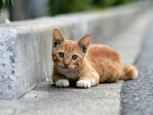 When cats find their way outside, they can easily become malnourished, sickly, and terrified.